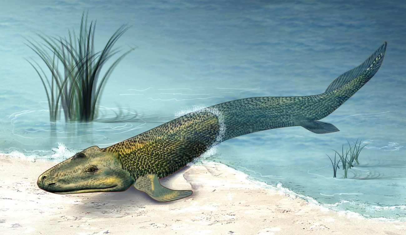 Found the missing link in evolution between fish and amphibians