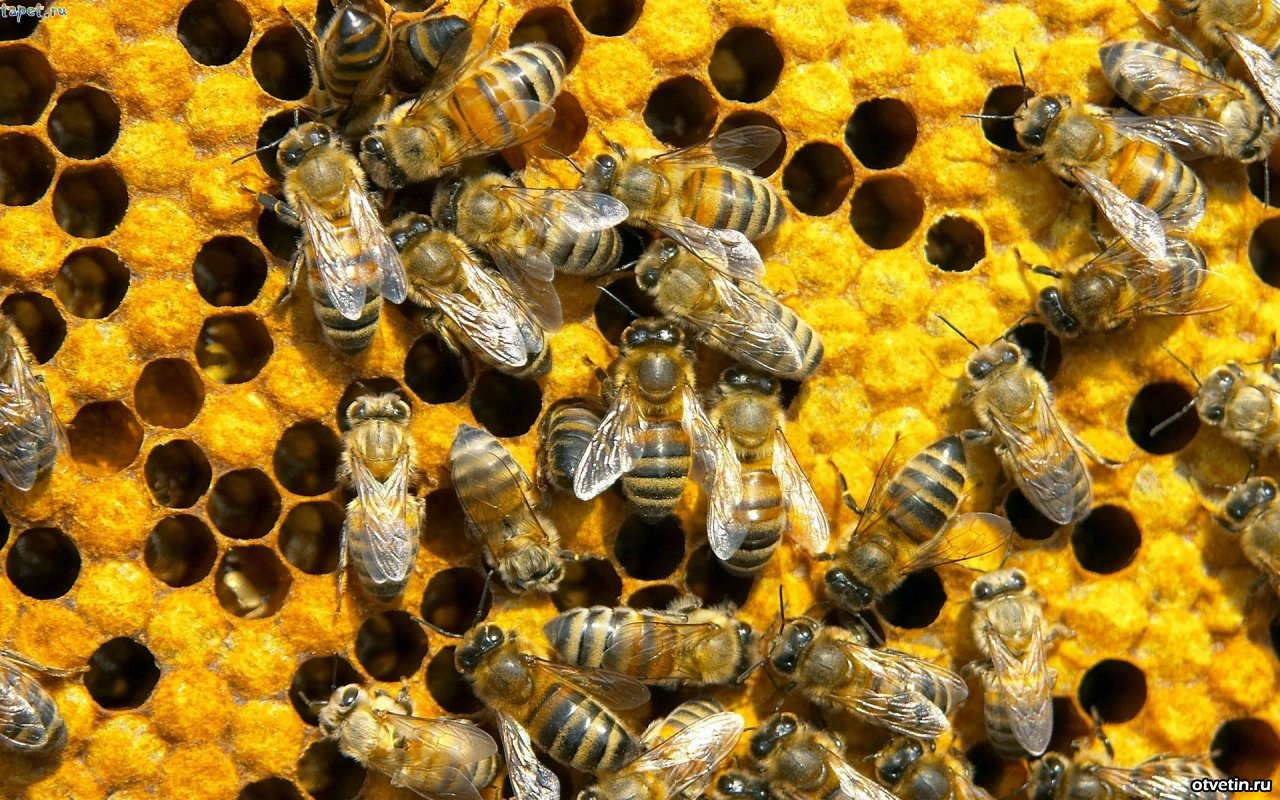 10 things that will disappear forever if the bees disappear