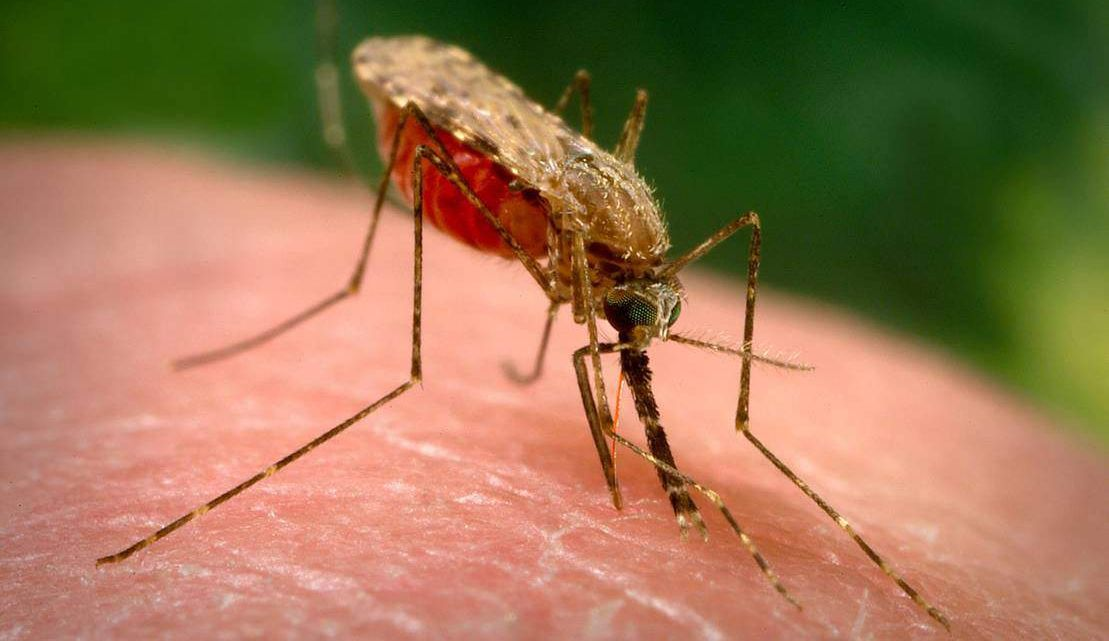 In the US mosquitoes are destroyed using biological weapons