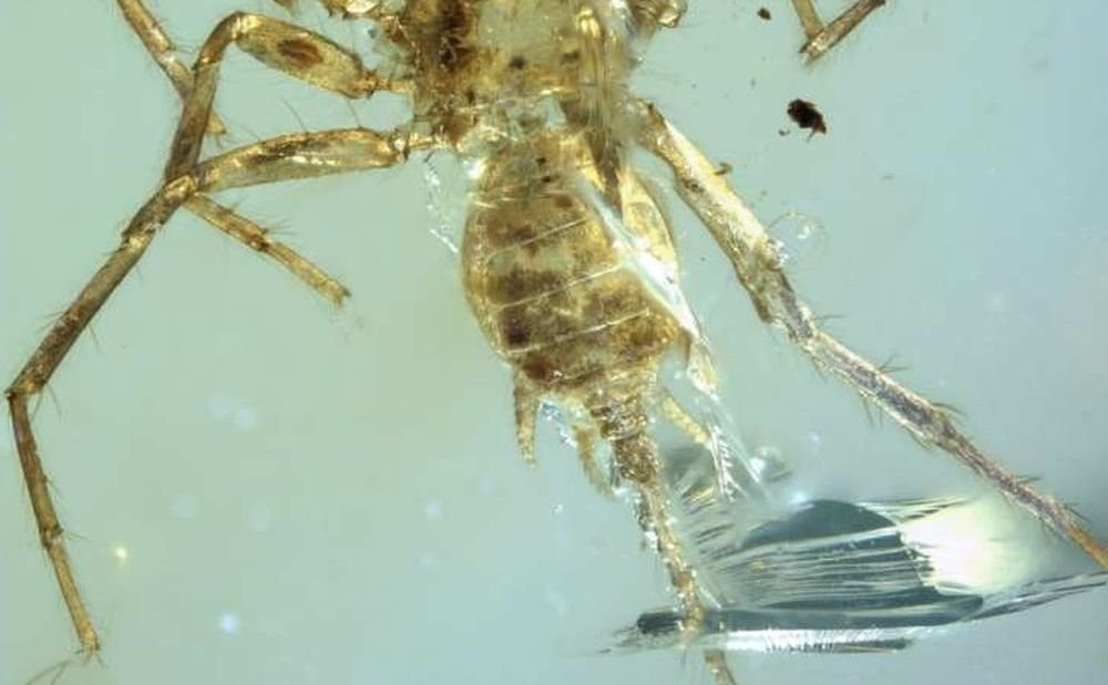Scientists have discovered a piece of amber extinct spider Chimera
