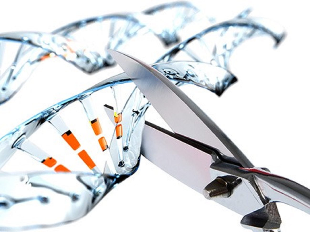 Scientists find unusual use of the editor CRISPR genome