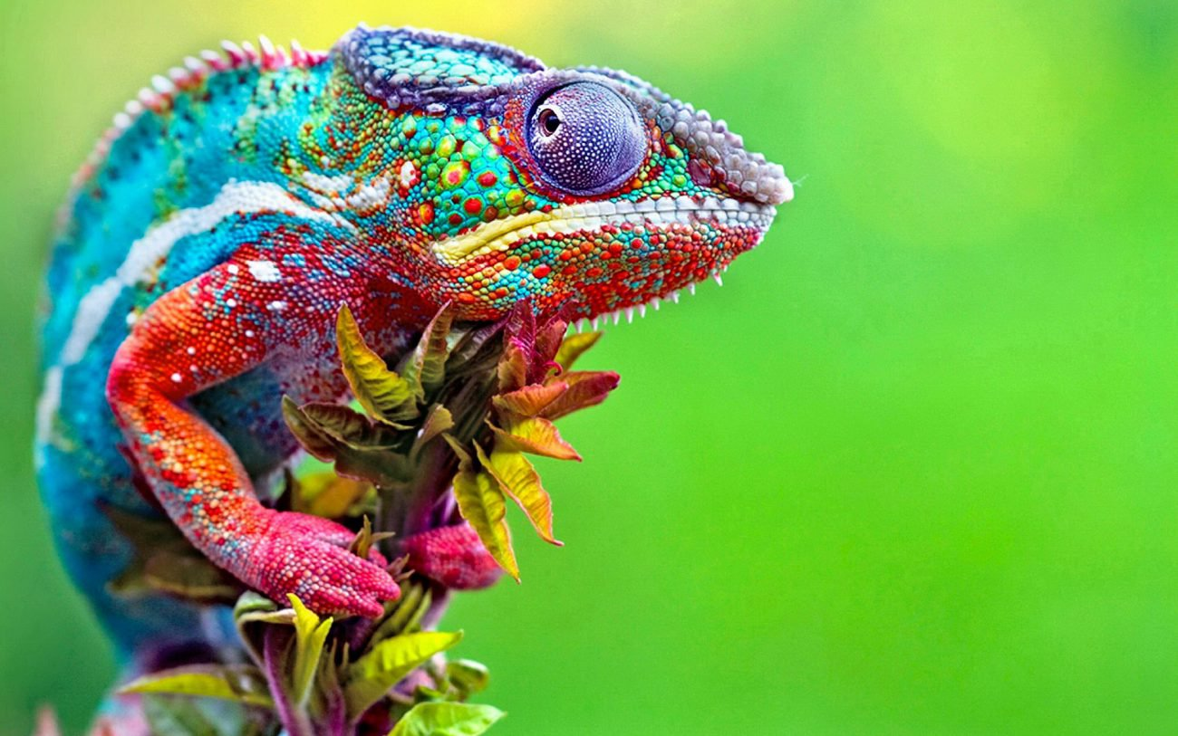 Russian scientists have created artificial skin of the chameleon