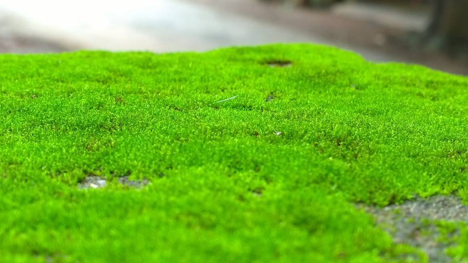 Scientists have found that green moss can be good for your health