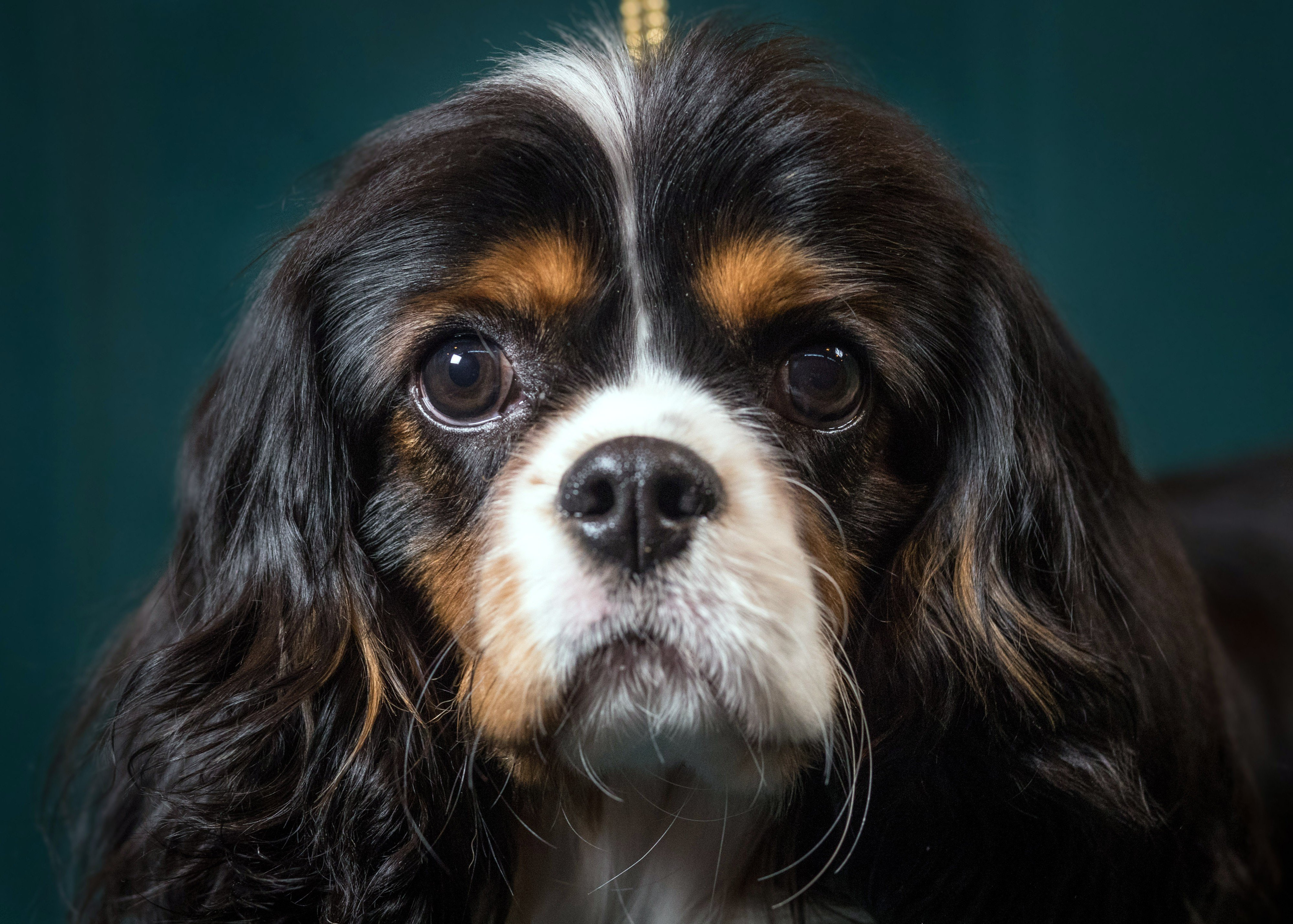 Secret Harvard startup wants to make immortal dogs, and then people