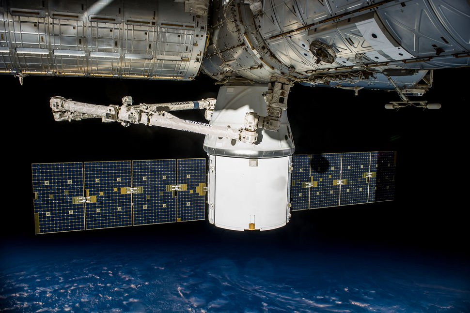 The cure for cancer, seaweed and mouse: what else will be sent to the ISS in future missions?