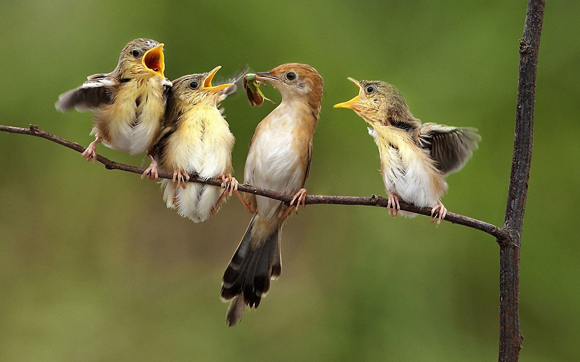 Artificial intelligence has learned to identify birds by their singing