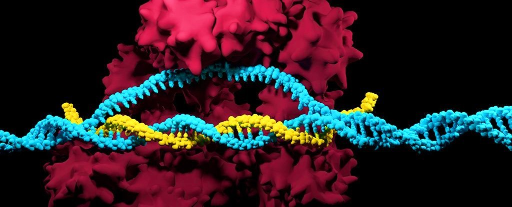 Gene editing with the CRISPR/Cas9 can be deadly