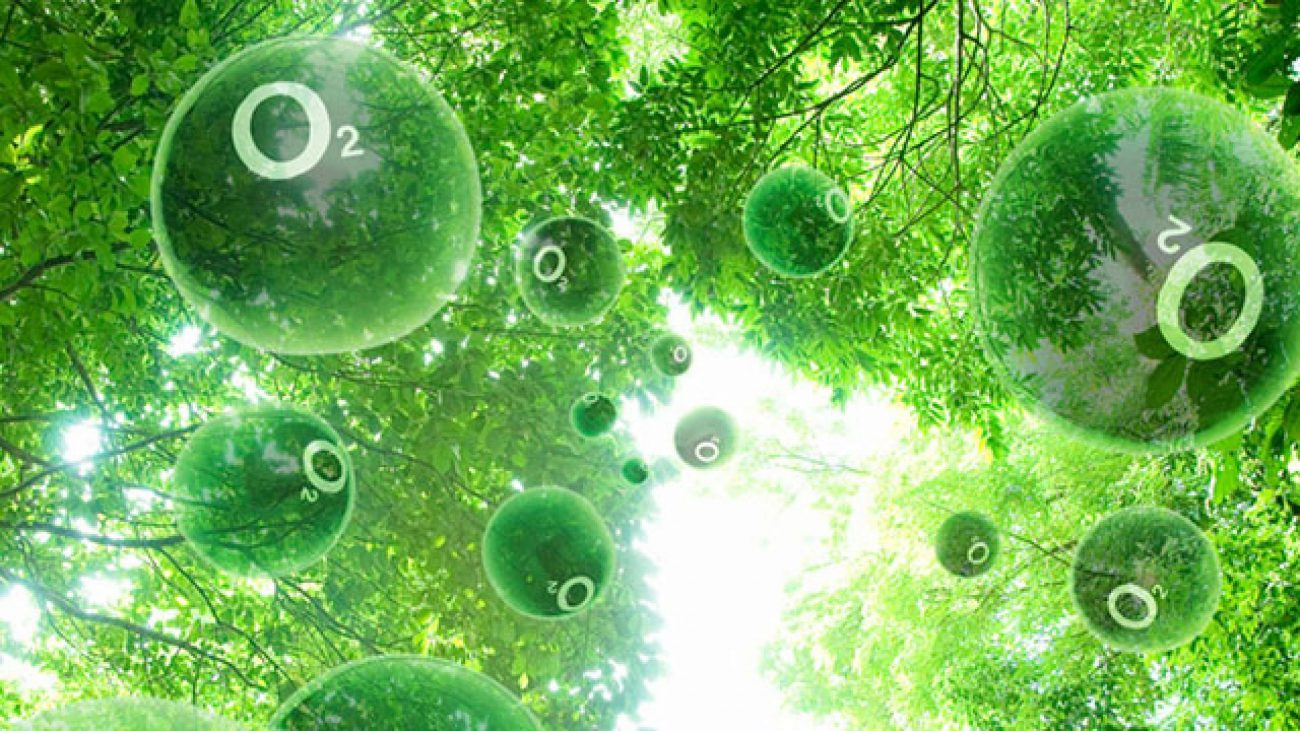Process semi-artificial photosynthesis helps to produce energy from sunlight