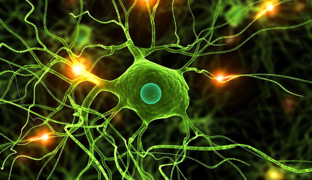 A new study shows that nerve cells are still recovering