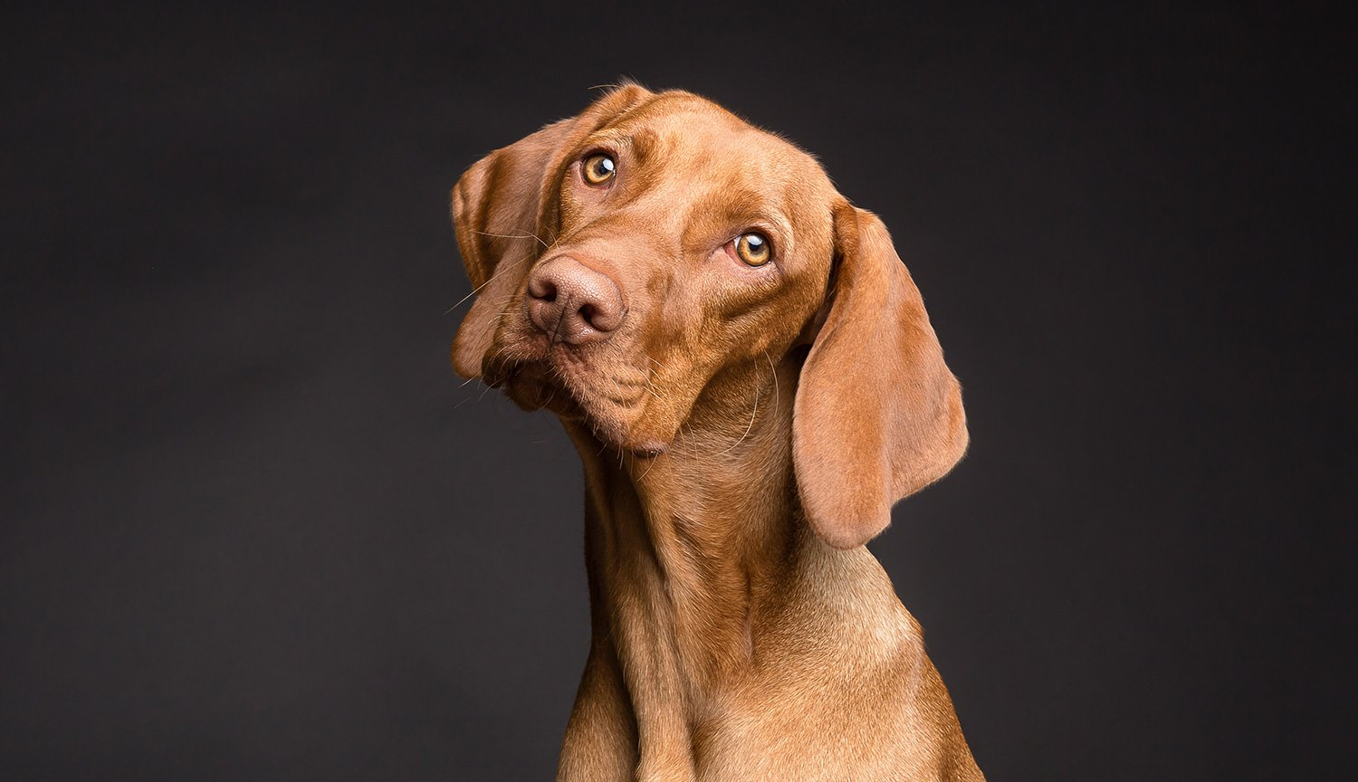 Imaging proved that dogs really do understand human speech