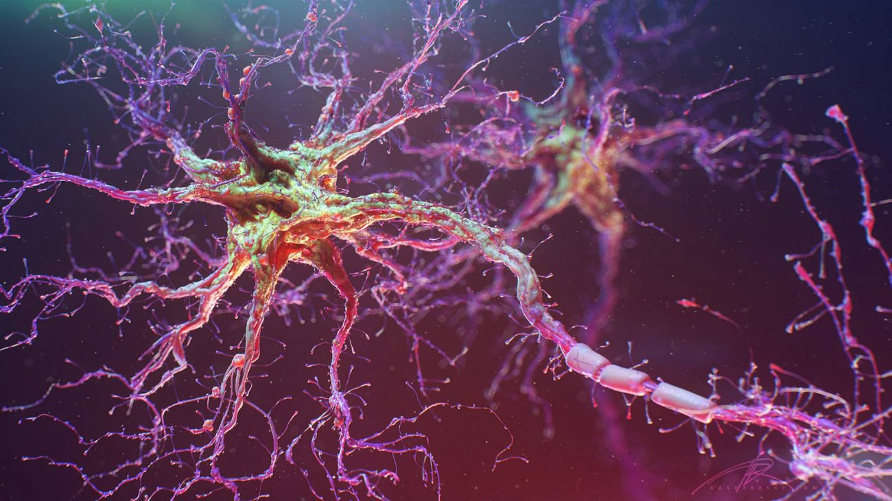 The researchers grew neural network from human stem cells