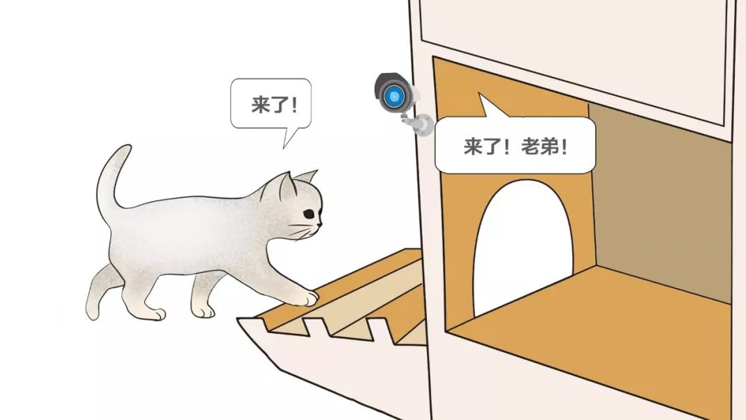 China has created a smart shelter for homeless cats