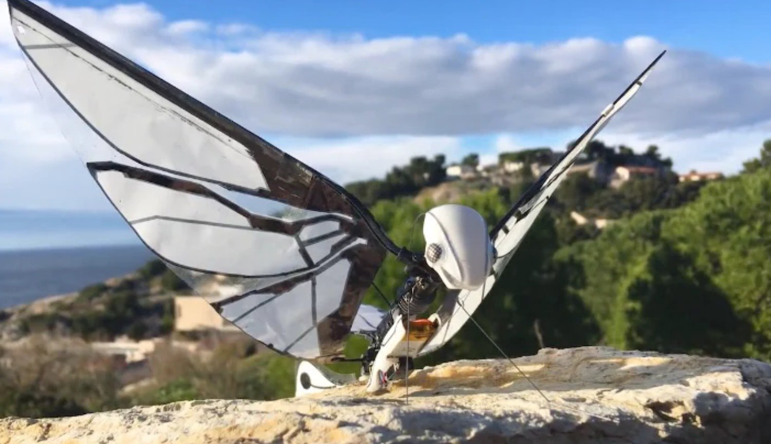 This robot is almost indistinguishable from live insects: see for yourself