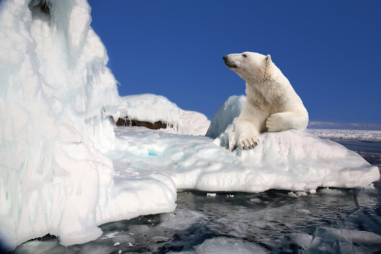 20 facts about the North pole that do not know everything