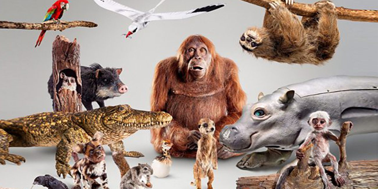 Robots filmed for the BBC's new series about animals