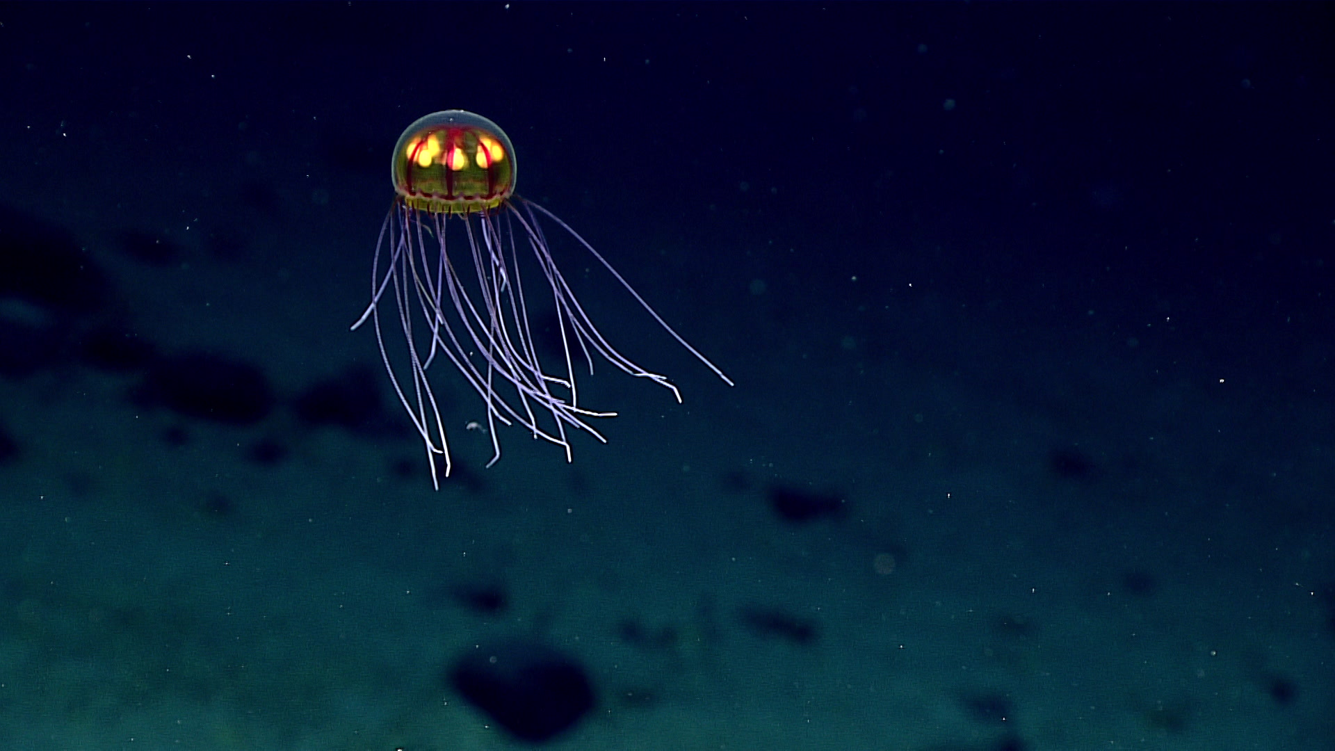 From the Mariana trench, noted elevated levels of toxic pollution