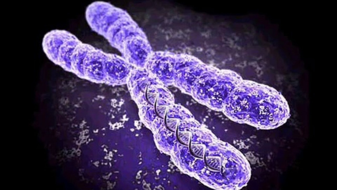Russian scientists have developed a new technology to detect chromosomal instability