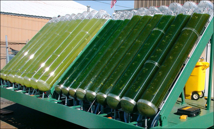 The Japanese company began developing jet fuel from algae