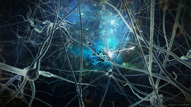 Neuralink Elon Musk. Part three: flight over a nest of neurons