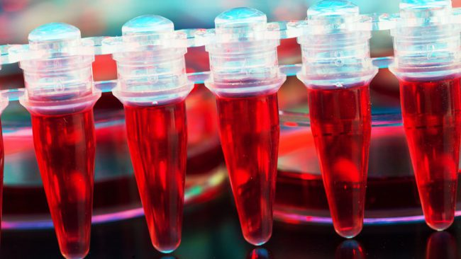Scientists have come nearer to the secret of the creation is inexhaustible donor blood cells in the laboratory