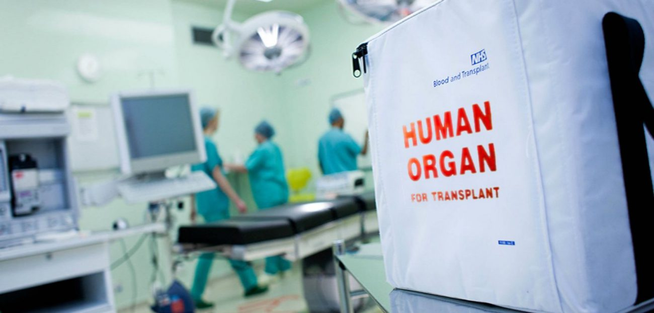First grown pigs whose organs can be transplanted to a human