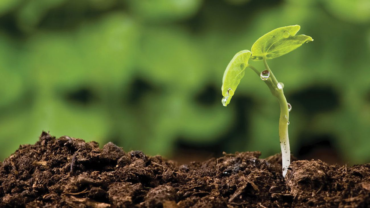 Scientists from Krasnoyarsk invented the artificial soil