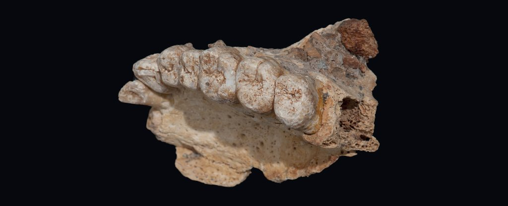 Modern humans came out of Africa 50 thousand years earlier than previously thought