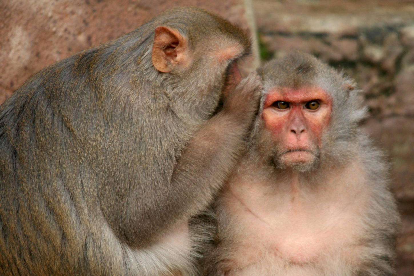 Human stem cells are returned to the monkeys the ability to grab objects
