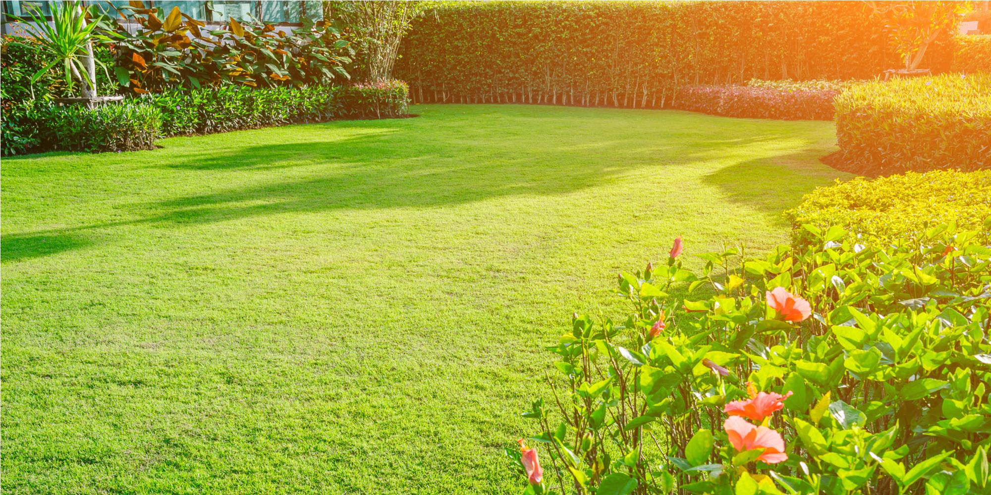 Environmentalists believe that the modern lawn more harm than good