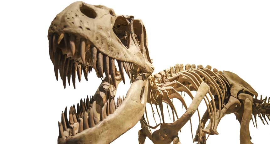 T. rex bite with incredible force: two times stronger than any living creature