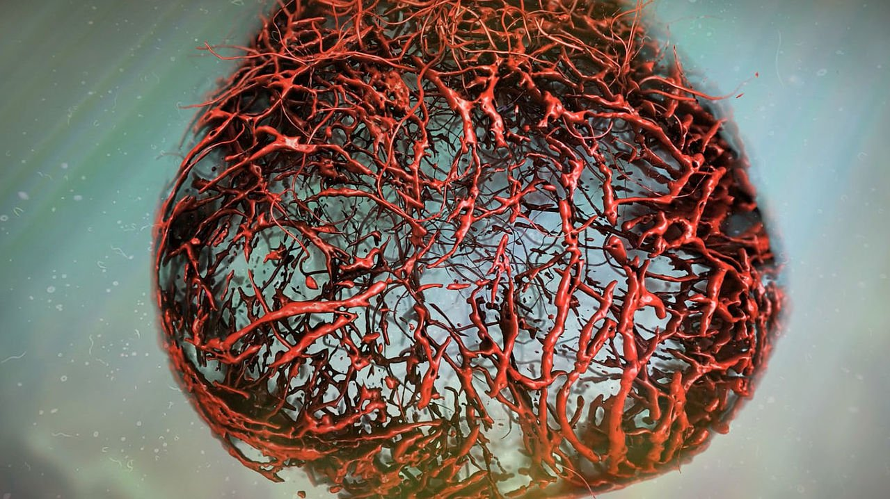 Scientists have grown in the lab, the ideal of human blood vessels