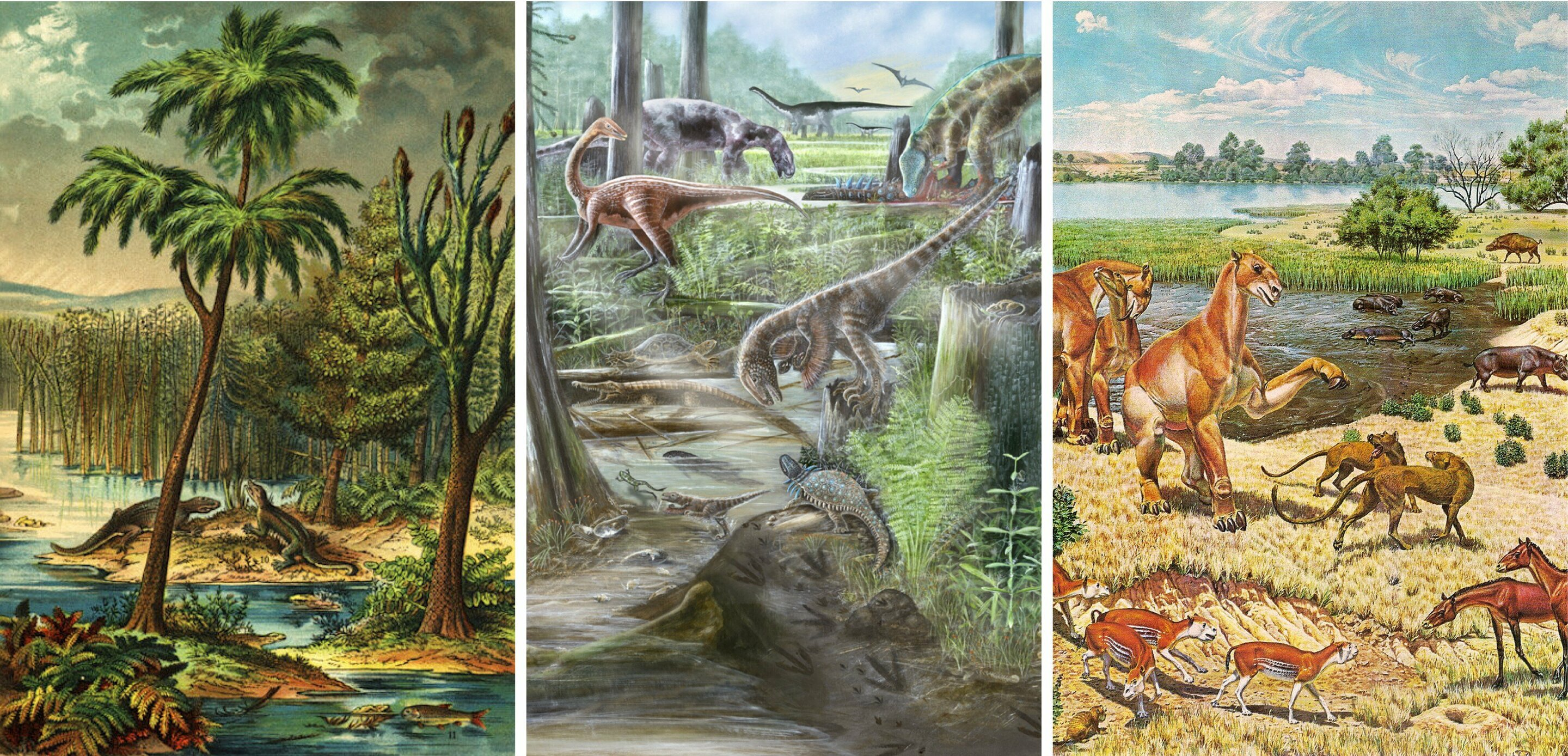 The diversity of life on Earth has not changed since the dinosaurs