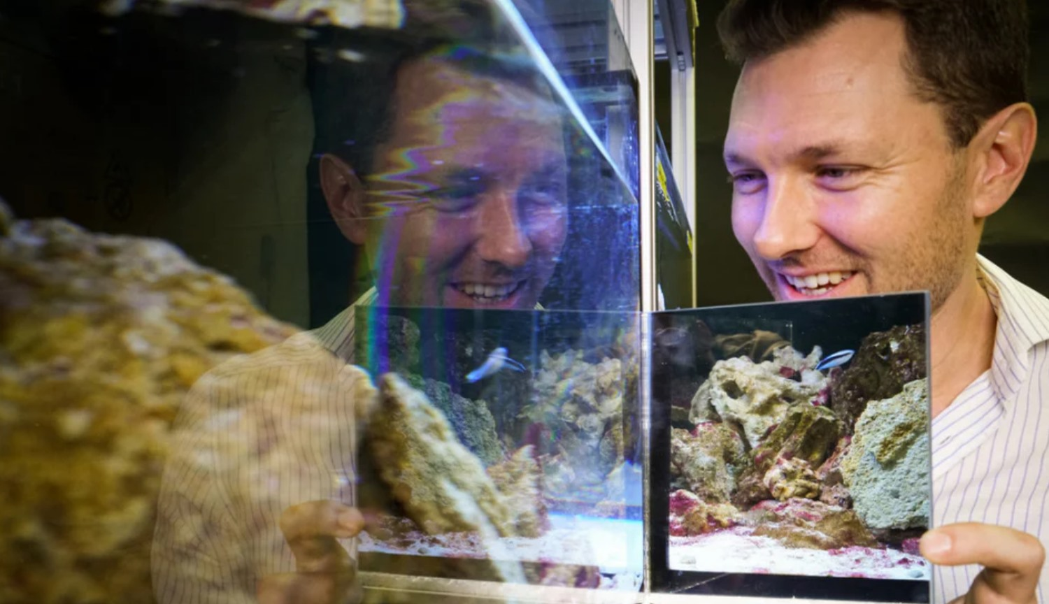 Experiment: find out whether the fish themselves in the mirror?