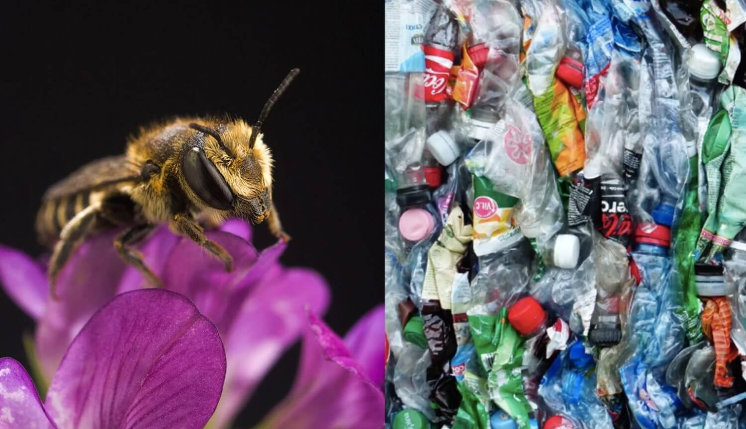 The bees have started to build nests entirely from plastic waste