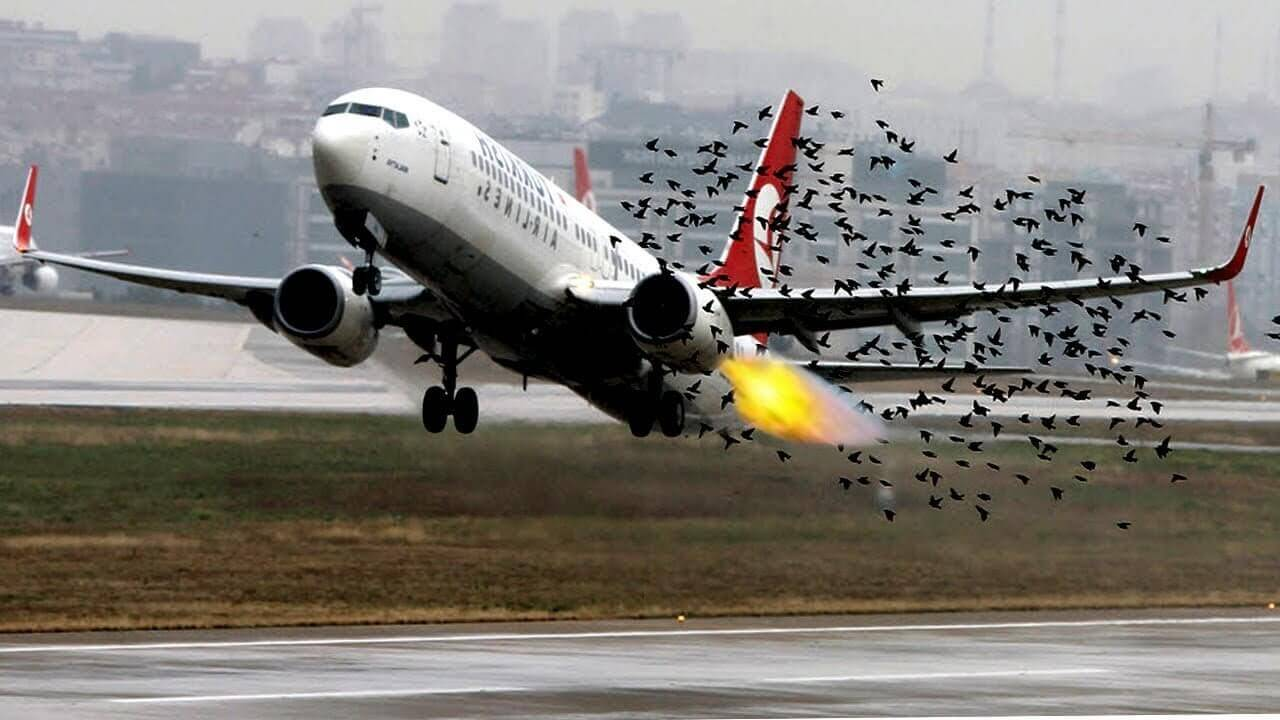 Why do birds collide with aircraft?