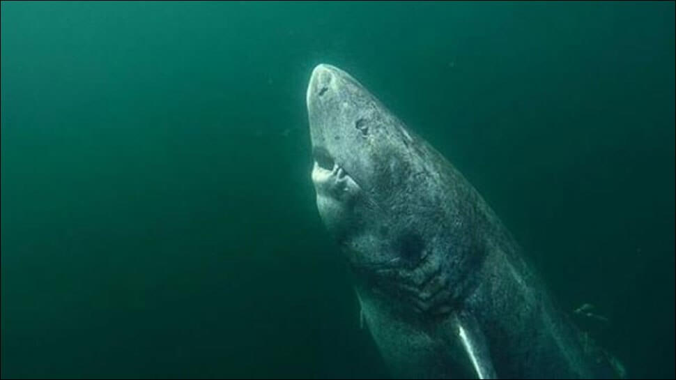 In Greenland found a shark at the age of 512 years. Is it true?