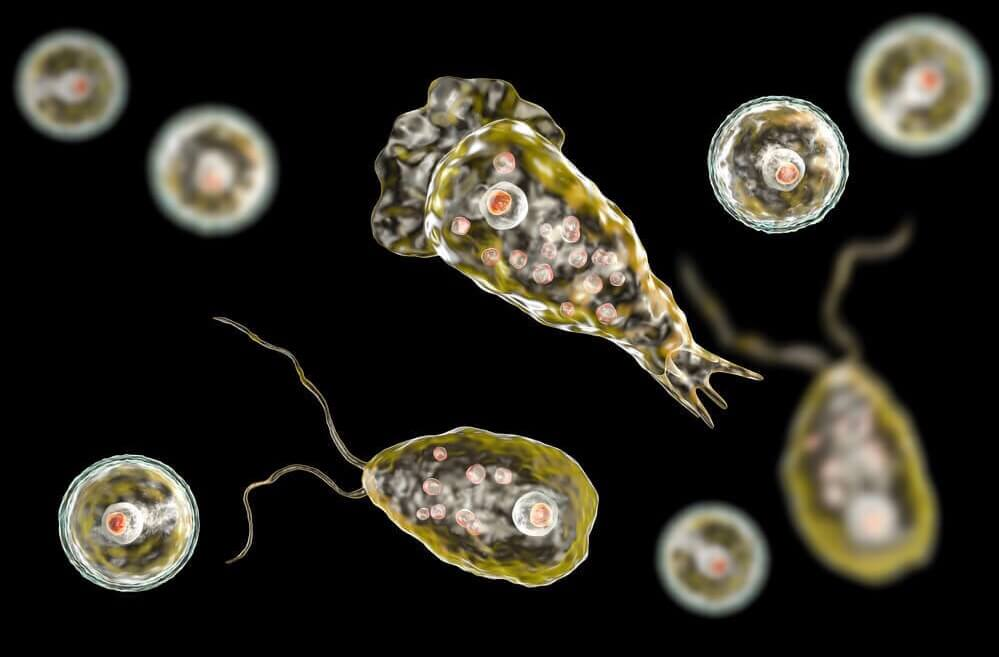 Perfect killer — amoeba, brain-eating