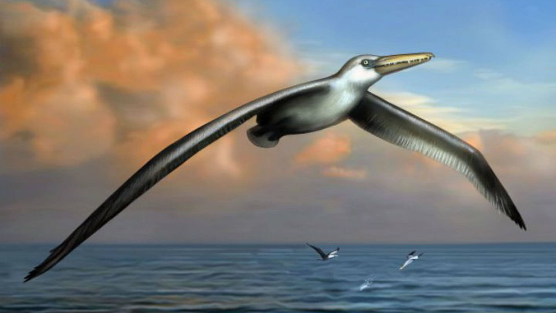 Found the remains of the oldest birds in the world. What can they share?