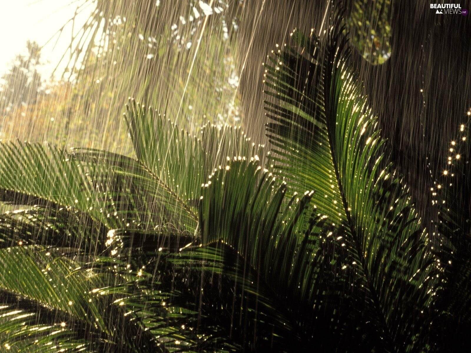 When it rains, the plants are in a state similar to a panic