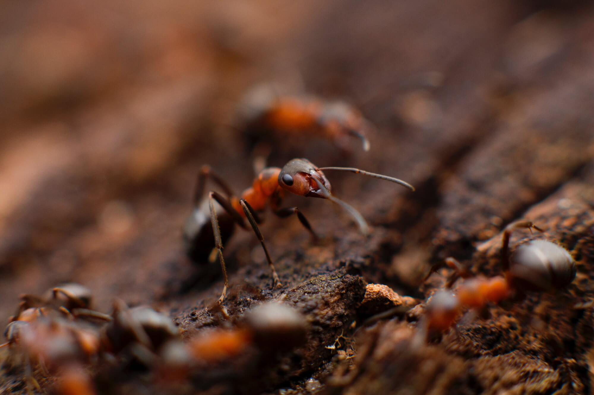 The ants survived for years in an abandoned bunker with no light and food