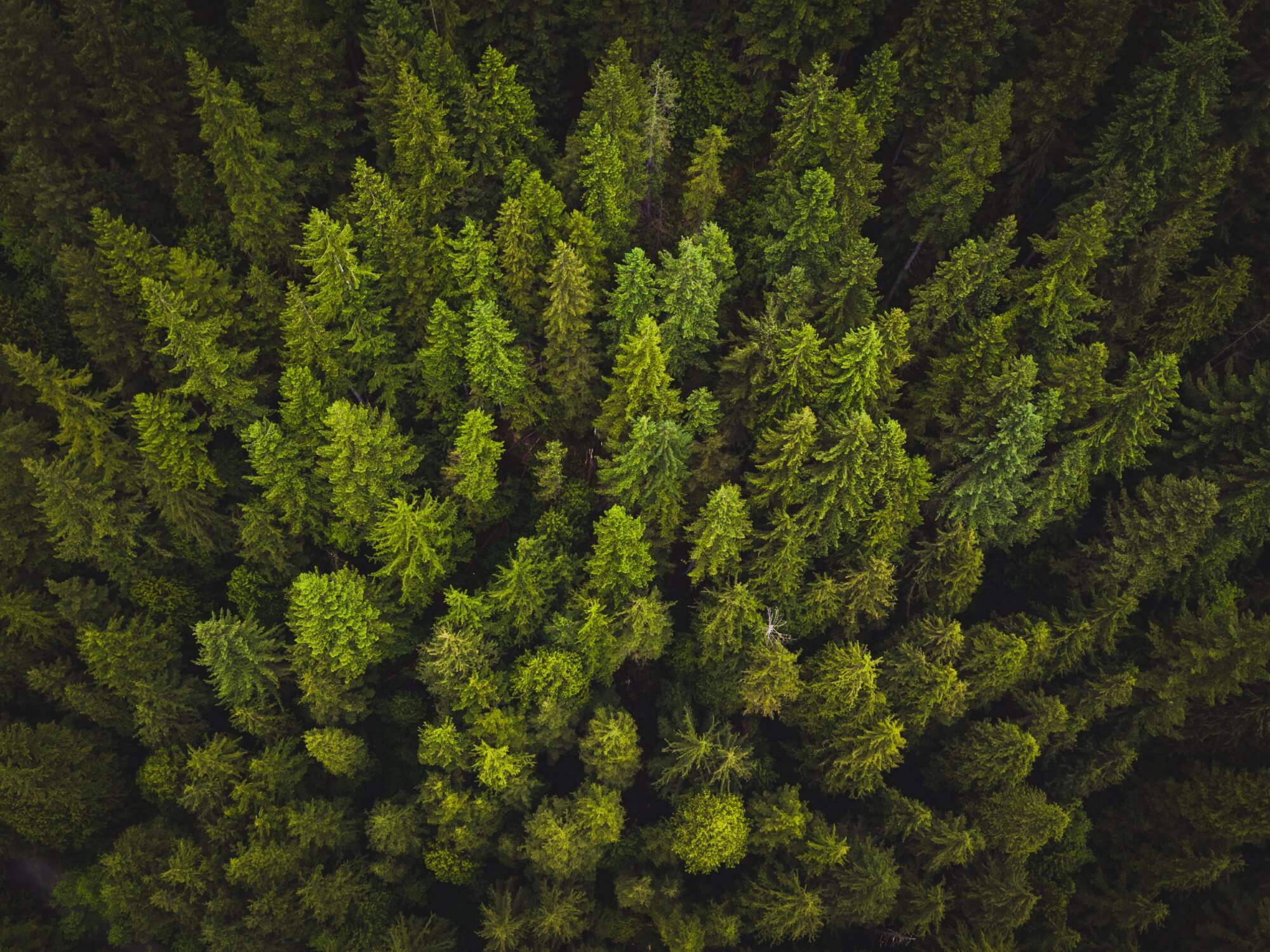 Trees emit greenhouse gases can accelerate global warming