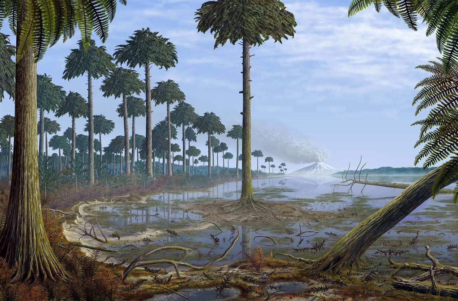 In the United States discovered the remains of the very first trees on Earth