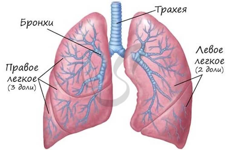 As a transplanted lungs, and who needs it?