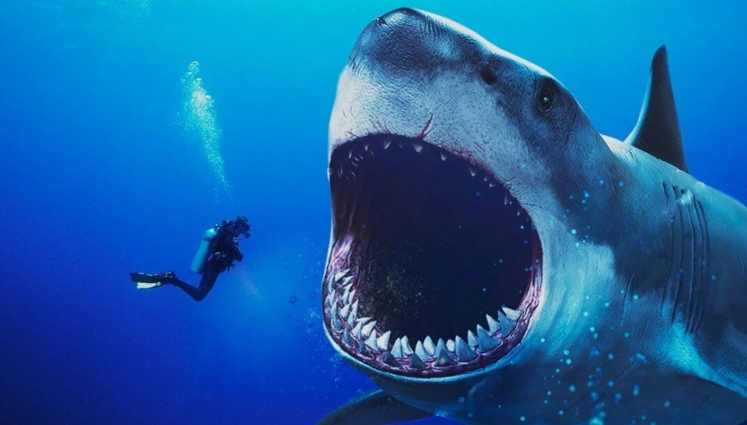 What animals are afraid of a shark?